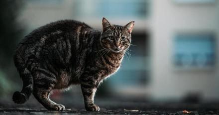 Il cherche son chat pendant 2 jours et entend des bruits d'un endroit qui lui donne des sueurs froides