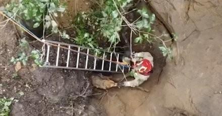 Le chien s'amuse dans le jardin, le jeu vire au cauchemar quand il chute de 40 mètres de haut (vidéo)