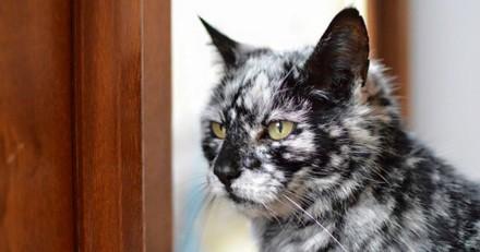 Scrappy, ce chat noir devenu blanc va vous faire craquer (Photos)