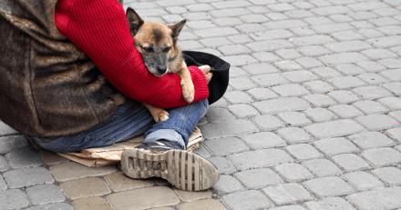 Les étudiants vétérinaires de Lyon s'organisent pour soigner les animaux de SDF