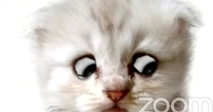 Filtre chat (et autres animaux) sur Zoom : comment l'installer ?