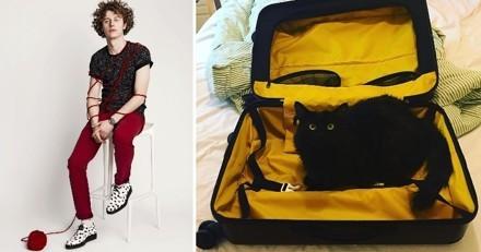 Après la mort de son chat Sergi, Norman est prêt à adopter un nouvel animal de compagnie