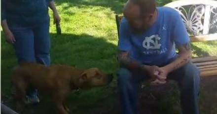 Les touchantes retrouvailles entre ce chien et son maître qu'il ne reconnaît plus