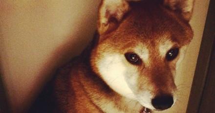 Elle adopte un chien, pense qu'il ne l'aime pas et réalise quelque chose que tout le monde devrait savoir
