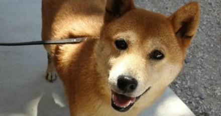 Ils adoptent un chien dans un refuge, 2 ans après tout bascule et les volontaires sont furieux