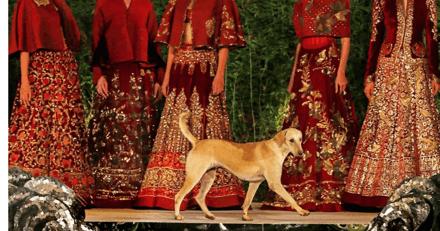 Ce chien errant s'est incrusté dans un défilé de mode