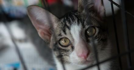 Jardin de l'enfer : 13 chats retrouvés enfermés dans des clapiers à lapins !