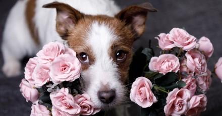Posséder un animal de compagnie vous rend (beaucoup) plus séduisant : découvrez pourquoi !