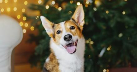 Noël 2019 : 5 jolies idées de cadeaux pour votre chien !