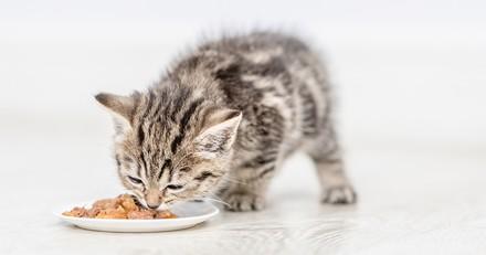 Quelle est la meilleure alimentation humide pour chaton en 2021 ?