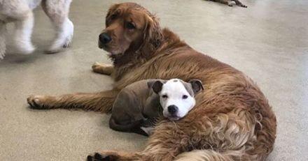 Lorsqu'elle est en pension, cette chienne choisit ses copains selon un critère bien précis