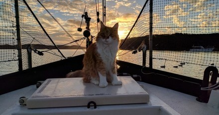 Ce chat navigue avec son maître sourd et devient ses oreilles en mer