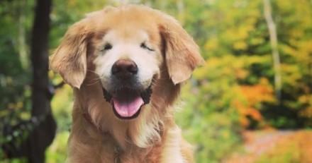 Ce chien de thérapie aveugle tient la main de sa maîtresse avant d'être euthanasié
