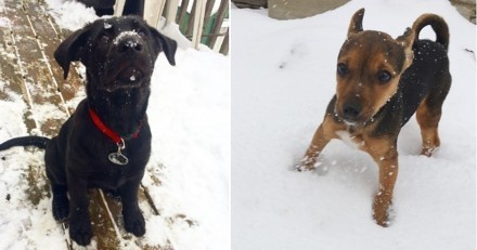 15 chiots qui découvrent la neige pour la première fois de leur vie