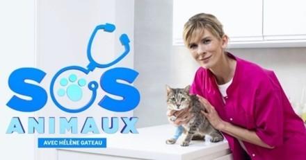 SOS Animaux : un neurochirurgien reconstruit la gorge d'un Bouvier Bernois dans l'épisode 1