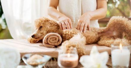 Dans cet hôtel, faites-vous pomponner au spa avec votre chien !
