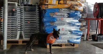 La SPA aide les animaux victimes de l'ouragan Irma