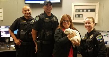 Ce petit lapin perdu a trouvé le meilleur des jobs dans un commissariat