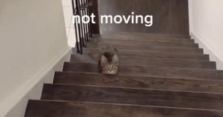 Un chat se prête au jeu Squid Game et devient une star sur Tik Tok