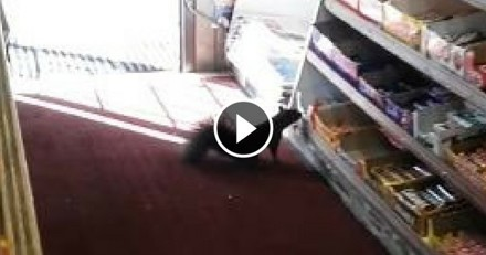 Des écureuils kleptomanes dévalisent une boutique... pour des bonbons : une vidéo à croquer !