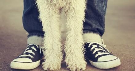 Saint-Raphaël lance un guide des bonnes pratiques pour les chiens en ville