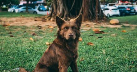 En rentrant du travail il croise une chienne errante, il voit ce qu'elle cache et sait qu'il doit agir vite