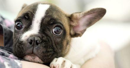 3 situations stressantes pour votre animal, et comment y remédier !