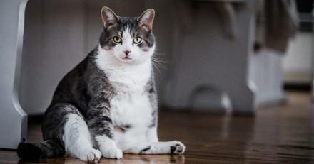 Comment prévenir le surpoids chez le chat ?