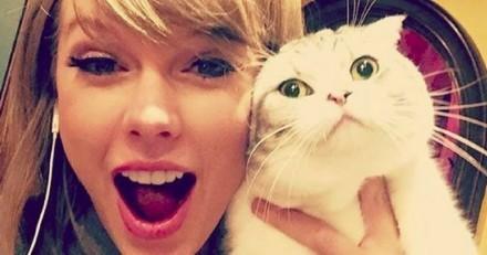 Les chats de Taylor Swift chouchoutés par Drake
