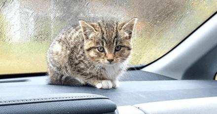 Miaulant à l'aide, un chat a été retrouvé abandonné dans un parking