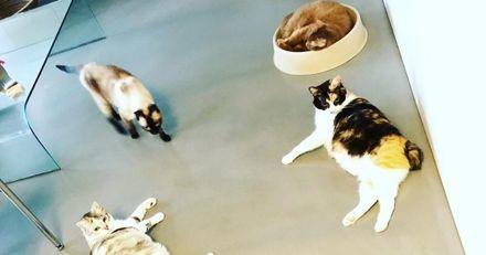 Regardez comment ces chats réagissent pendant un tremblement de terre à Taiwan ! (Vidéo)