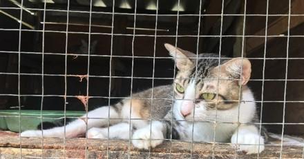Taïwan devient le premier pays d'Asie à interdire la viande de chien et de chat