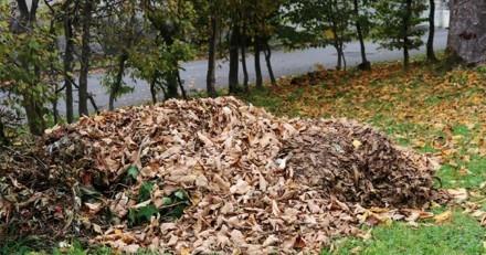 Elle entend des pleurs dans un tas de feuilles mortes : elle s'approche et s'effondre