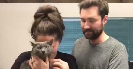 Ces retrouvailles entre un couple et son chat vont beaucoup vous émouvoir (Vidéo)