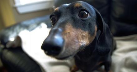 Elle poignarde sa chienne à cause de ses aboiements, la justice la condamne à une peine exemplaire