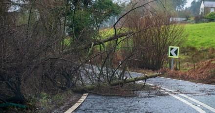 Tempête Ciara : une branche d'arbre lui tombe dessus et ce que fait son chien bouleverse les policiers