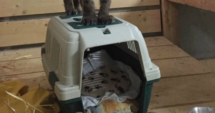 Elle voit un chat un peu étrange dans son appartement et réalise vite que ce n'en est pas un !