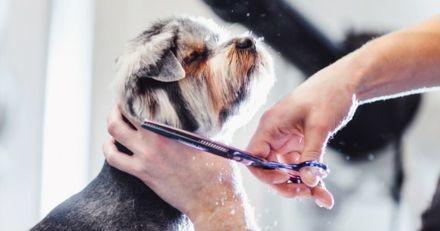 Pour Noël, un toiletteur canin offre ses services aux chiens dans le besoin