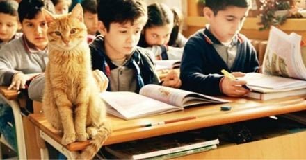 Ce chat est entré dans une classe et a décidé de ne plus en partir
