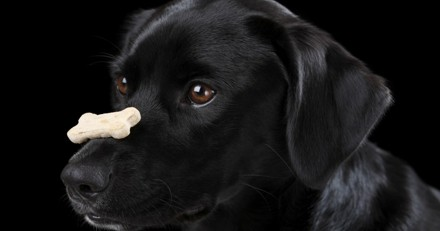 4 tours à apprendre facilement à votre chien