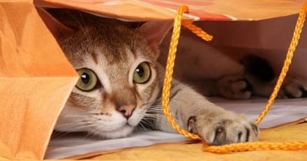 5 astuces pour apprendre des tours à votre chat