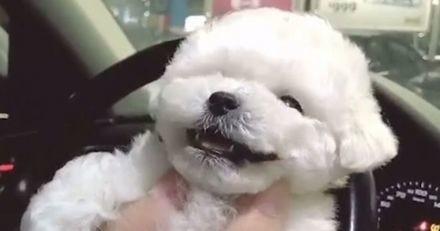 Votre dose de bonne humeur du jour : une compilation de chiens qui sont vraiment très heureux (Vidéo)