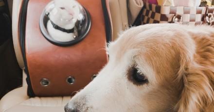 Quels moyens de transport pour partir en vacances avec son chien / chat ?