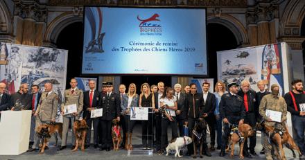 """3e édition du Trophée des Héros : l'appel à candidature de la Société Centrale Canine pour récompenser les """"chiens héros"""""""