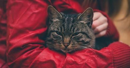 Ce chat malade dont personne ne voulait a trouvé une petite humaine aussi spéciale que lui sur qui veiller