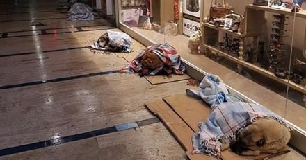 Des chiens errants accueillis dans les magasins turcs à cause du froid