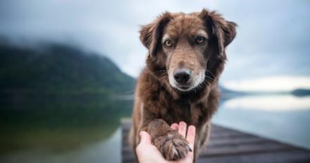 Le plus bel ami de l'homme sur France 4 : l'histoire de la relation entre les Hommes et les chiens