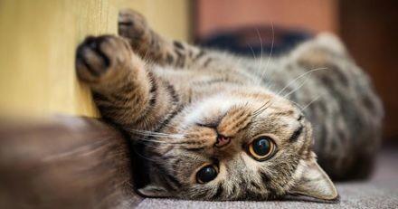 Quelle est l'espérance de vie d'un chat ?