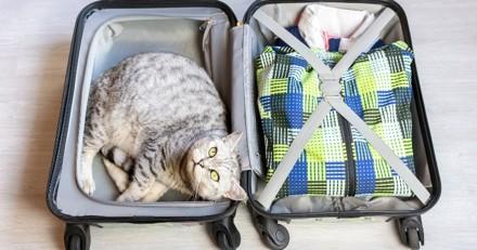 Tout ce qu'il faut savoir pour partir en vacances avec son chat