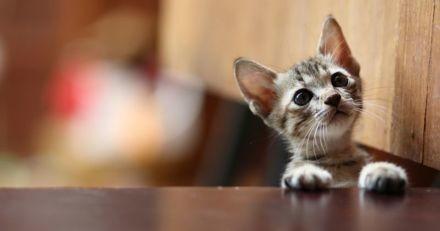 Il s'extasie devant les chats d'une animalerie : quand tout le monde le regarde, il comprend son erreur !
